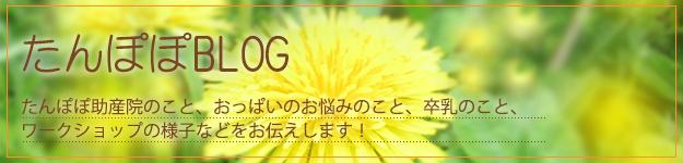 たんぽぽブログ